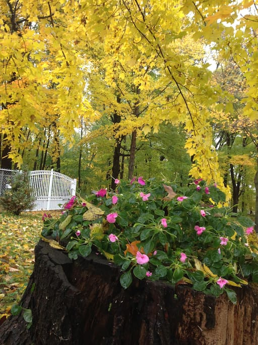 Fall colors are here and beautiful!  This is just inside our gate entrance! 10-10-2018