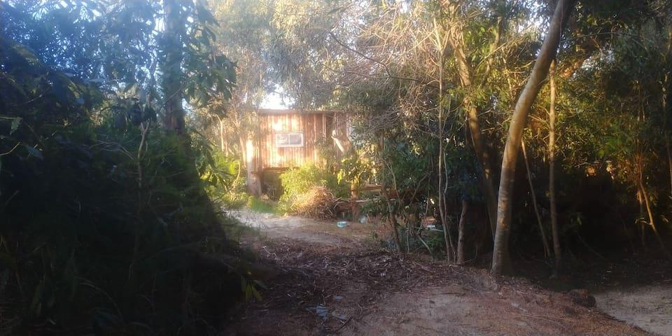 Aldea Charrua 2 (la casa del árbol 2)