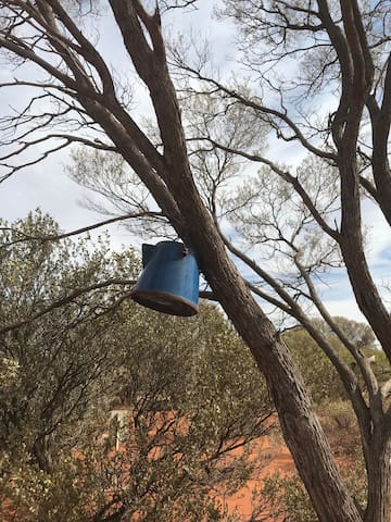 You just never know what you may see hanging in the trees...
