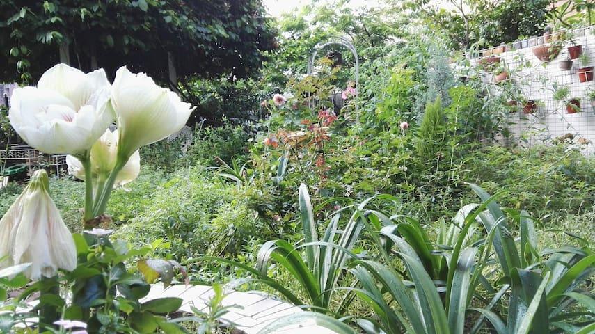 绿色宜家风格 共享四季花园的民宿