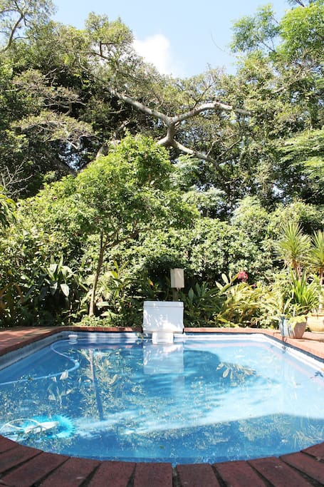 Pool in tropical garden - there is also an orchid house to relax or read a book