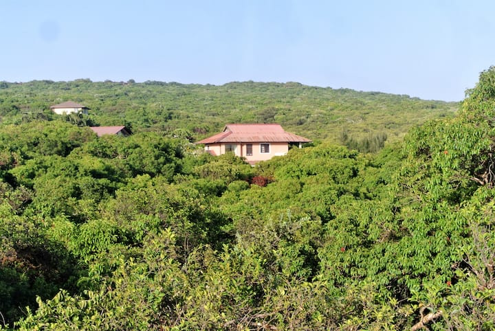 Home admist a forest