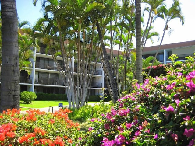The Maui Parkshore resort is smaller and has better access to the ocean then most neighboring properties.