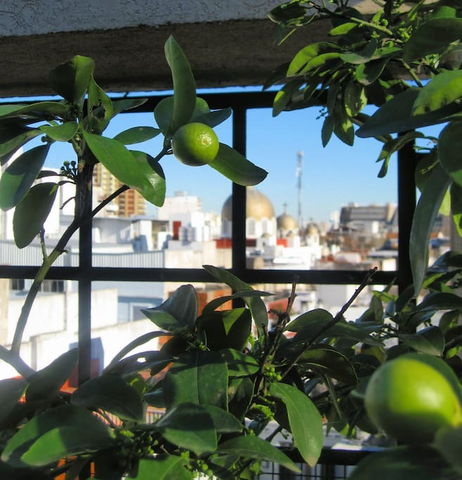 Jasmine covers the pergola, the golden cupolas of San Jorge Cathedral can be seen in distance.