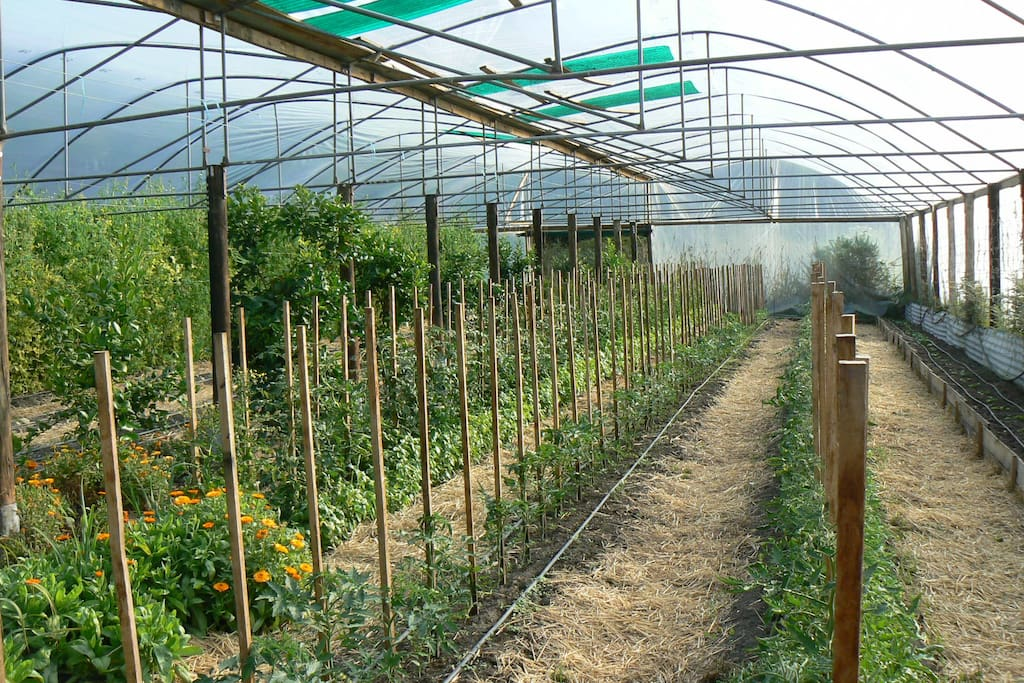 We are certified organic farmers