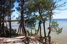 Les beaux paysages changeant au fil des saisons. La forêt vivante, exploitée depuis 2000 ans.