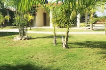 MANY TROPICAL PLANTS THROUGHOUT