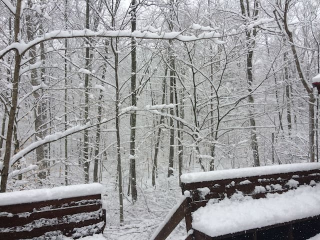 Woods off the deck on a snowy day