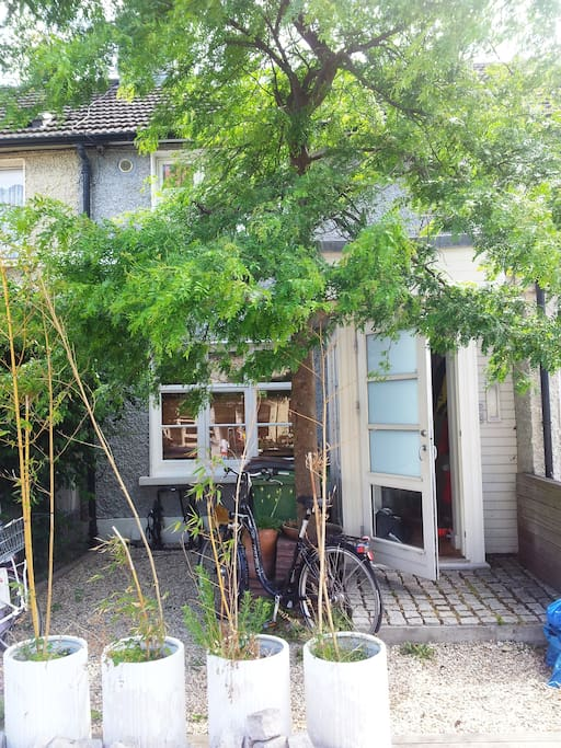 Front Garden  with potted bamboos  and bikes