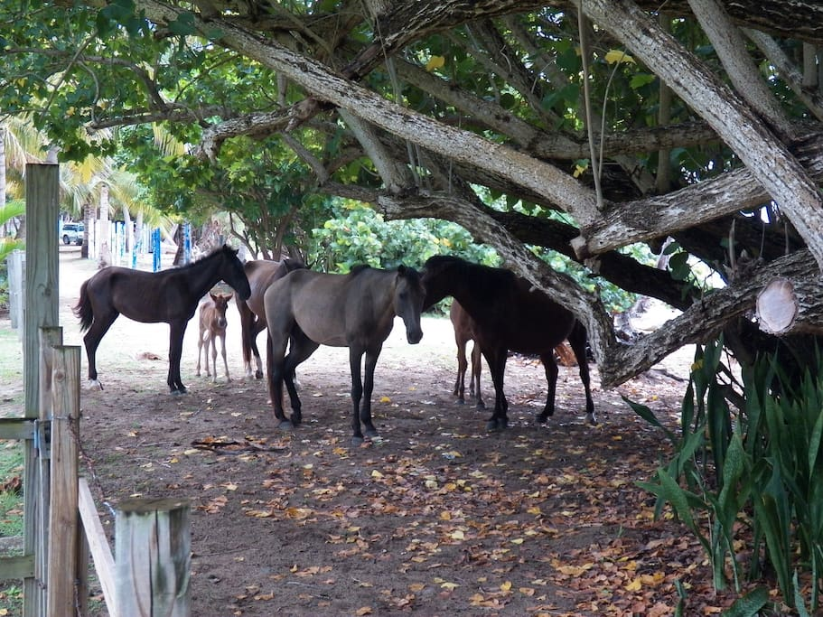 Wild Horses early morning on our Beach Frontage.