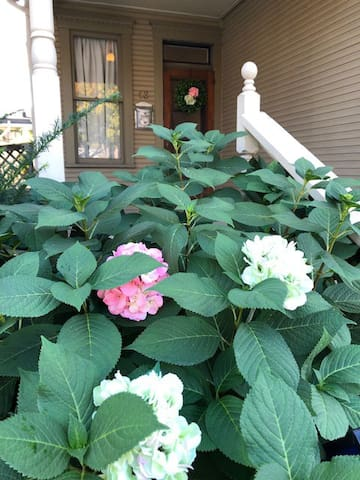 The Hydrangea Nest ~ Close and Cozy