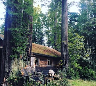 Cabin in Redwoods at Ocean! - Albion