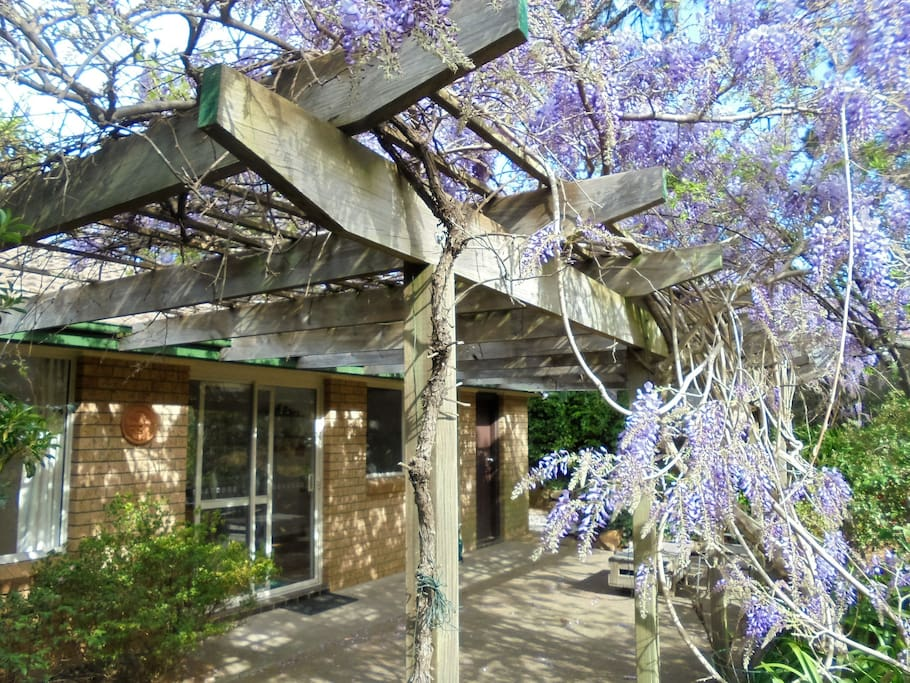 Back Patio - Wisteria in Springtime!