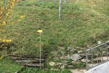 6. gleich LINKS am Zaun entlang....NICHT DEM WEGWEISER NACH RECHTS FOLGEN