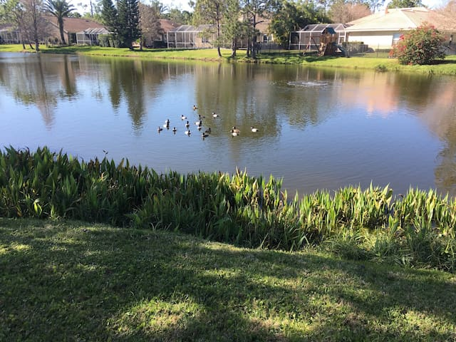 Beautiful home with pool & pond view in Westchase - Tampa - Ház