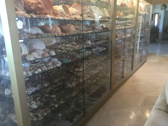 Indo-Pacific Caribbean Shell Collection.