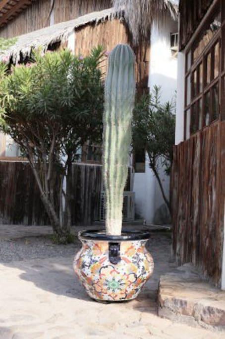 Cactus outside of casa