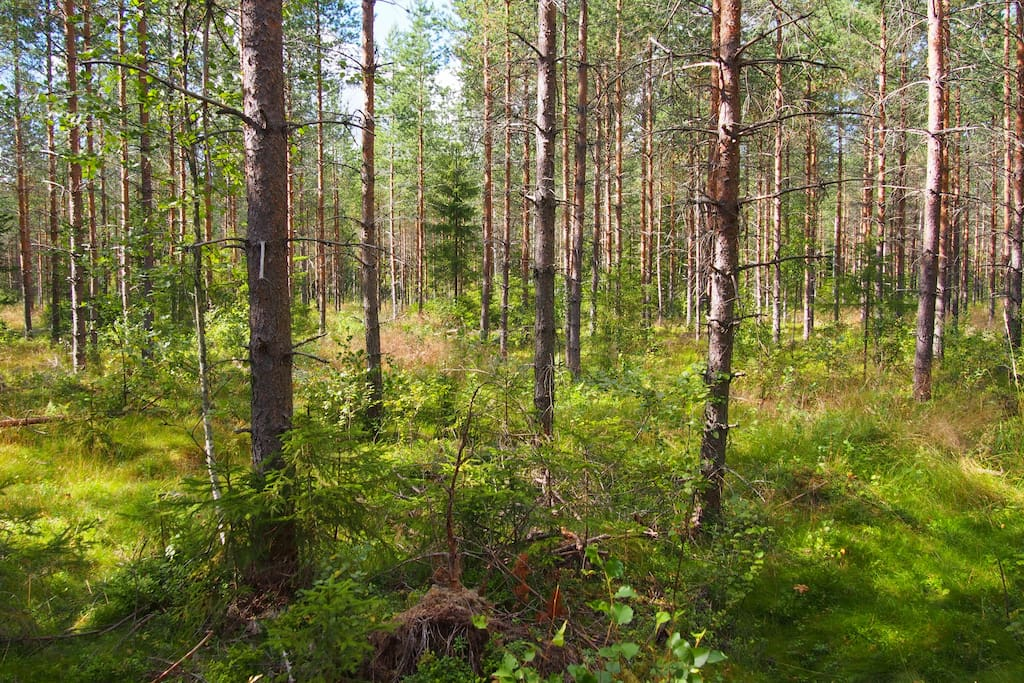 Here you can feel the real Finnish nature!