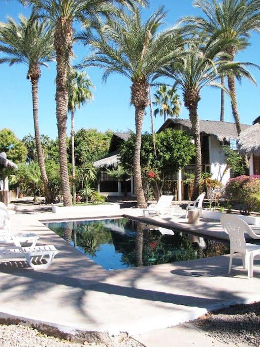 Pool and Date Palms