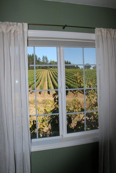 Here is a close-up on the vineyard view.