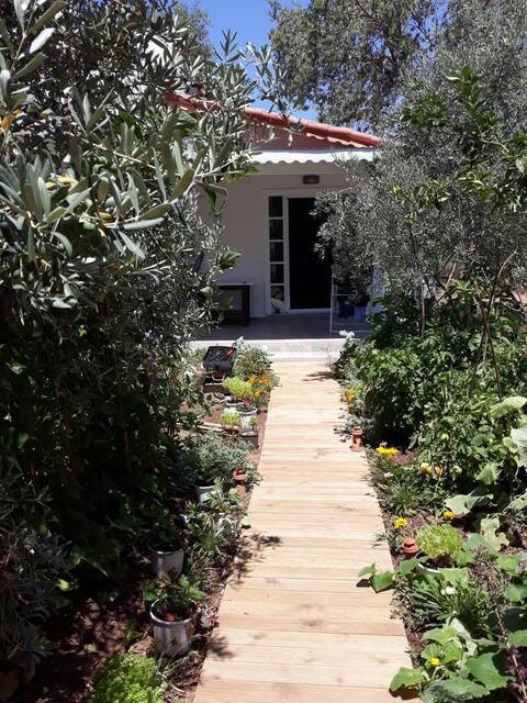 Home with Single Garden