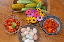 Fresh eggs from our hens and veggies from the garden. We enjoy sharing with our guests during harvest.