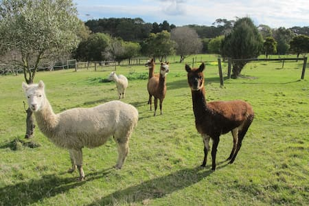 Rolling Hills and Alpacas - Main Ridge - Aamiaismajoitus
