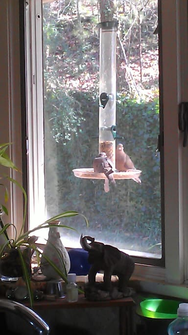 The doves love this area outside of kitchen window.
