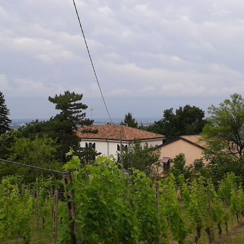Camera con vista sui vigneti - Tortona - Bed & Breakfast