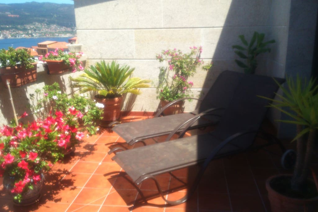 Terrace with plants & flowers/Terraza florida/Terrasse fleurie
