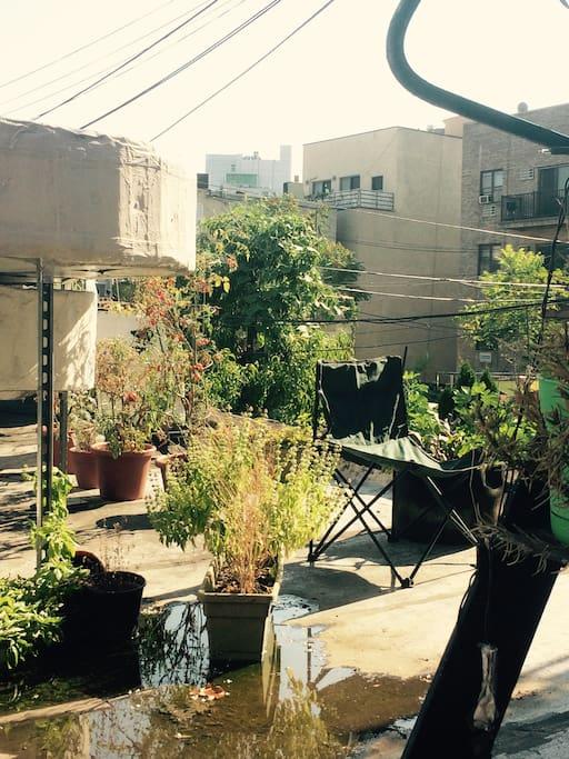 Our little roof garden