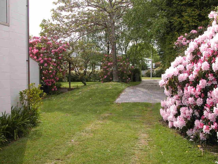 Spring in Taupo.