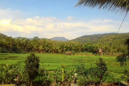 LIFE IS MORE THAN LIVE - Yogyakarta