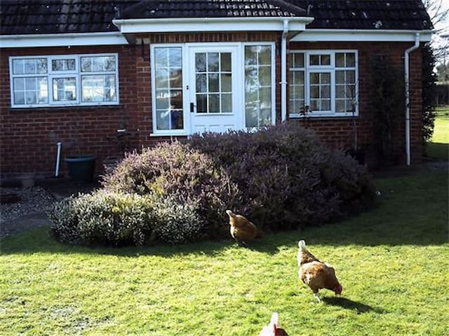 The Paddocks B&B & Smallholding
