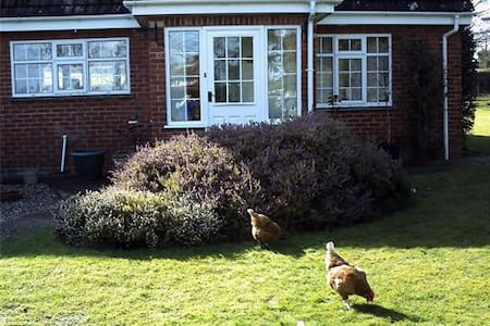 The Paddocks B&B & Smallholding - melbury abbas
