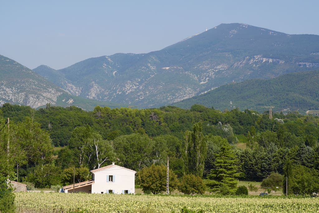 Secluded, not isolated, vines, olives, fruit trees and sunflowers around house.
