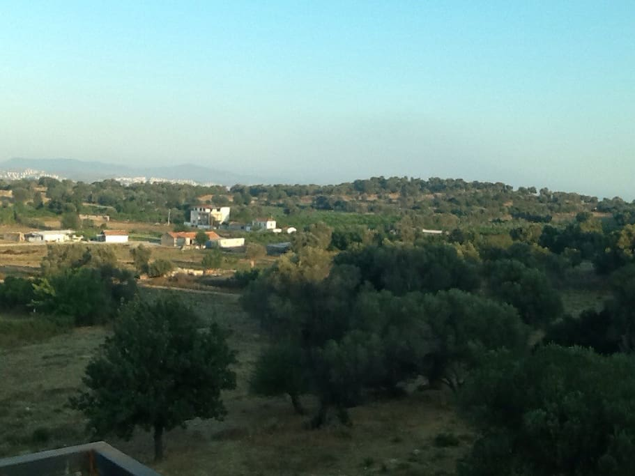 Vue sur les oliviers de la terrasse
