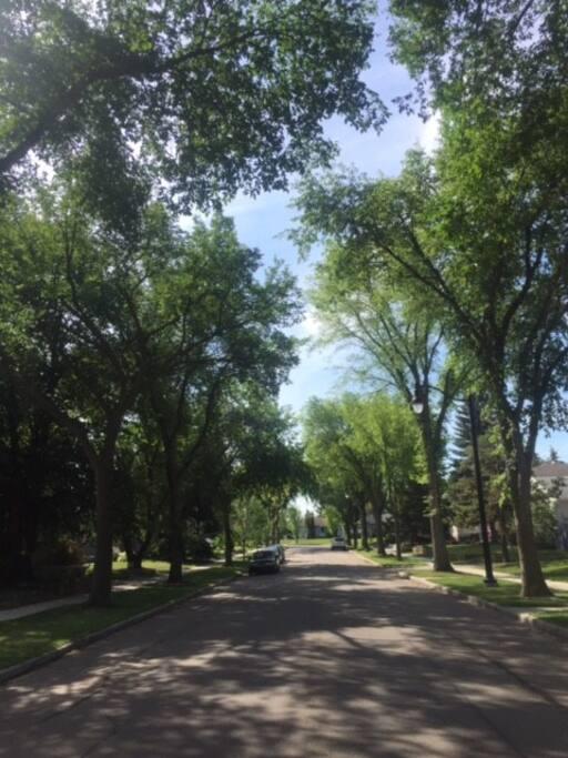 Ample parking on tree-lined street