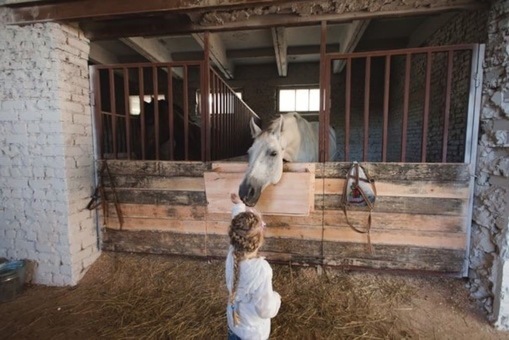 The hostel is located next to a stable with beautiful and calm horses.