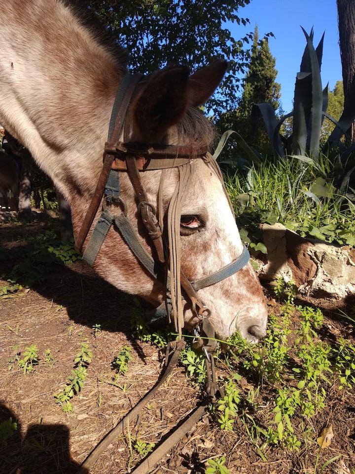 Horses missbehaving. Don´t let them eat!