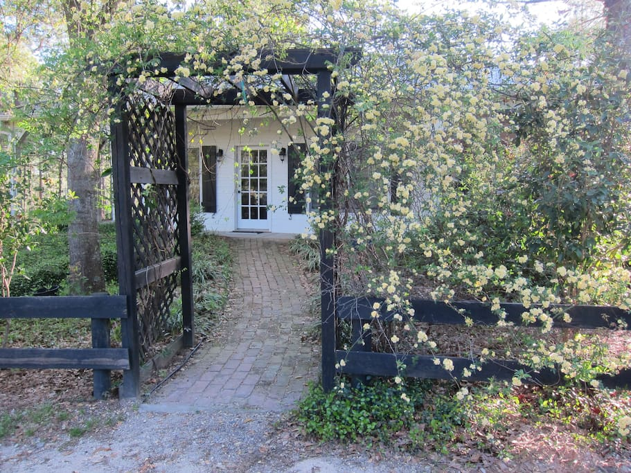Petita arbor entrance with spring  Lady Banksia