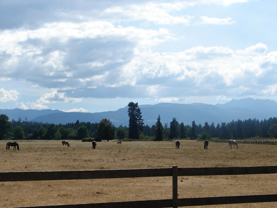 Horses in our hay field after 'haying season'; as seen from Mountain view room.