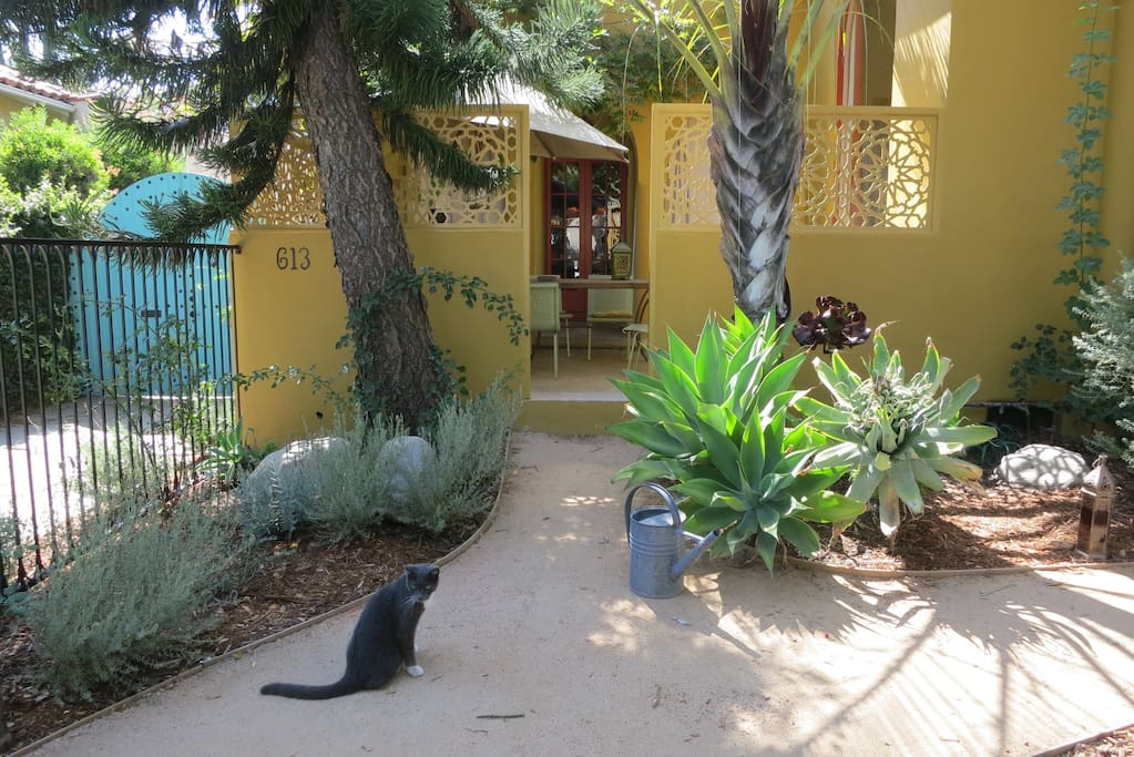 Front garden filled with roses, agaves, and lavender. A favorite spot of Smokey the cat.