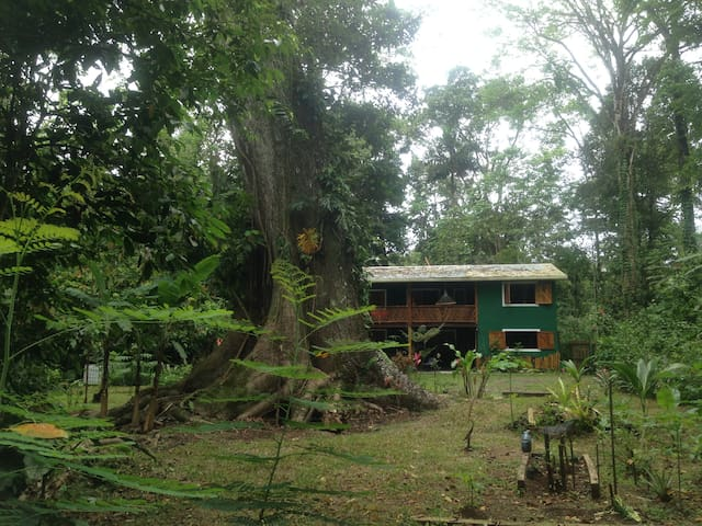 Full equpped Jungle Green House (PlayaChiquita) - Playa Chiquita  - Hus