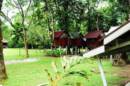 Unique Tree House Jungle Experience - Gopeng