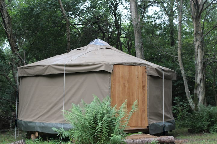 Yurt luxury woodland camping