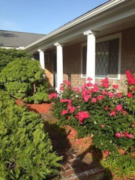 Rose garden @ home entry