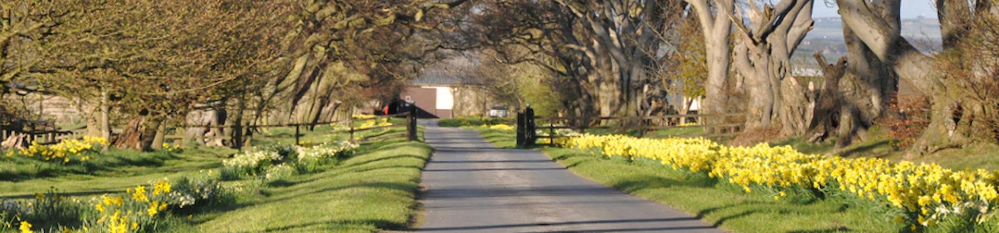 Ivesley Equestrian Centre - เดอแฮม - ที่พักพร้อมอาหารเช้า