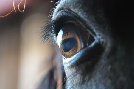 Bydlení na farmě u koní v Beskydech - Třanovice - 独立屋