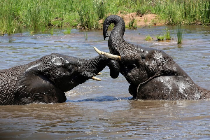 Tsheshepe Safari Lodge Welgevonden Game Reserve